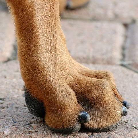 dog grooming austin