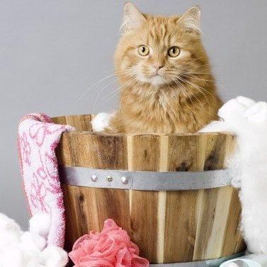 cat groomer austin
